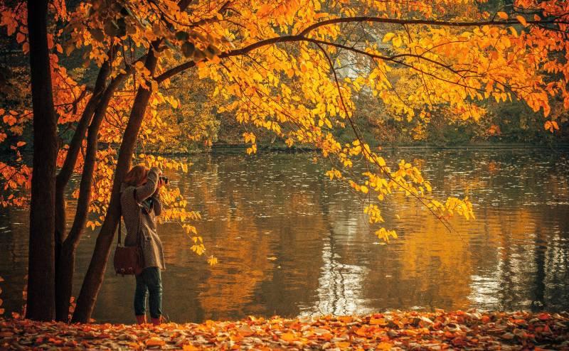 DSLR Kaufberatung Herbstwald